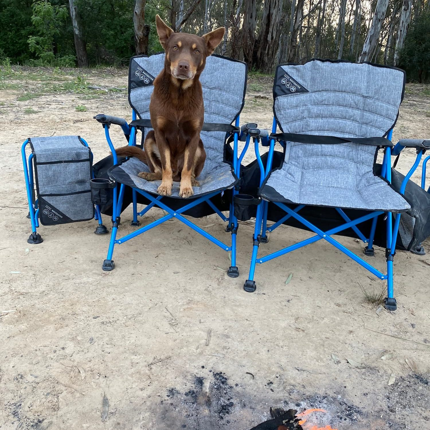 dog-sitting-on-camping-chair